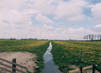 F013241 Landschap Kampereiland nabij Kampen, op de horizon loopt de Heultjesweg.