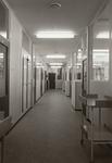 4726 gang: zuigelingenafdeling, 1967