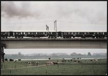 Koeien in de uiterwaard van de Lek met daarboven een trein op de spoorbrug naar Culemborg