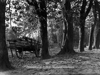 ehc_gp_114 Open kar tussen de oude bomen met vallende bladeren tijdens de herfst 29-10-1937