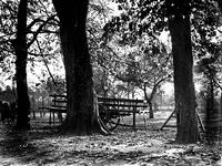 ehc_gp_117 Open kar tussen de oude bomen met vallende bladeren tijdens de herfst 29-10-1937