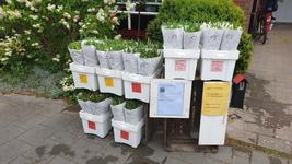 457 Tulpenverkoop