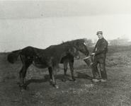 B-945VIII Het voeren van paarden door een medewerker van Gemeentereiniging op een weiland in de omgeving van ...