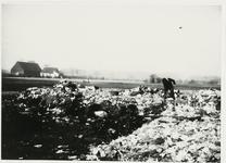 B-955XX Personeelslid van Gemeentereiniging op de stortplaats op een weiland in de omgeving van Middelburg.Origineel ...