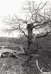 2546 Boom in het bos van de Manteling bij Oostkapelle