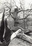 2547 Boom in het bos van de Manteling bij Oostkapelle