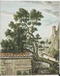 1449 De ruim 400 jaar oude moerbeiboom, achter het voormalig kasteel Oostende te Goes, gesneuveld in de strenge winter ...