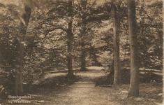 419 Het bos, de Manteling, bij kasteel Westhove te Domburg