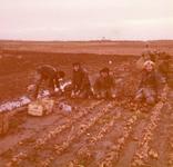 AR-0037-119 Renesse. Leden van de brandweer van Renesse helpt de om de uienoogst van de familie Kostense binnen te ...