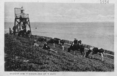 BRU-2428 Bruinisse. Stoofpolder. Koeien grazen op de hoek van de Stoofpolder (het Nieuwelandje) bij de opstelling van ...