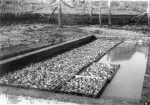 BRU-2804 Bruinisse. Haven. De oesterputten van Abr. J. v.d. Berg. Oesters in de bakken op de verwaterplaats bij de haven
