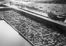 BRU-2805 Bruinisse. Haven. De oesterputten van Abr. J. v.d. Berg. De verwaterplaatsen voor de oesters bij de haven.
