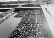 BRU-2806 Bruinisse. Haven. Oesters in de verwaterplaatsen bij de haven.