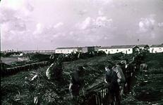 RK-1711 Ouwerkerk. Watersnoodramp 1953. Barakkenkamp. Vlechten zinkstukken t.b.v. dijkherstel op de Zate bij het reeds ...