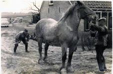 SGP-1082 Jan Stevense, dierenarts te Renesse en hoofd van de vleeskeuringsdienst op Schouwen-Duiveland in actie.