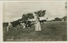 KLD-P-54 Een vrouw in Zuid-Bevelandse dracht in een wei met koeien