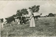 KLD-P-55 Een vrouw in Zuid-Bevelandse dracht in een wei met koeien