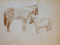 3677 [paarden]