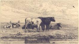 369 [Koeien aan de oever van de Schelde]