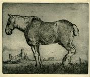 3758 [paard]