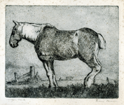 3763 [paard]