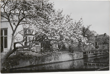 M 12118 Het milde weer van de afgelopen dagen heeft met geweld de luierende en nog wat huiverige bloemen en bloesem de ...