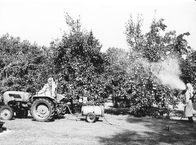 200024 Zusters gaan de strijd aan met ongedierte in de tuin van de priorij te Heesch