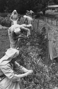 200045 De tuin van de priorij Fons Vitae te Heesch vergt veel onderhoud
