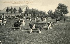 PB4062 groep Stamboekvee. Eigenaar-fokker: A. Vijfvinkel Lzn., ca. 1929