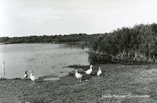 PB4363 Ganzen aan de oever van het Quackjeswater, ca. 1939