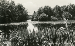 PB4424 Het Quackjeswater, 1956