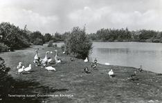 PB5308 Ganzen bij de Tenellaplas, ca. 1962