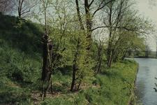 DIA02399 Geriefhout op de verdedigingswerken; ca. 1984