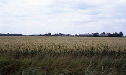 DIA35054 Landelijk gezicht op het dorp vanaf de Tussenweg. Uitgestrekte akkers met rijpend tarwe; ca. 1993