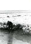 AB_HAASDIJK_026 Aanleggen van drainage in een akker langs de Haasdijk; ca. 1977