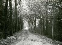 OV_GROENEWEG_02 Oostvoorne; Het Overbos, 1930