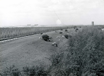 OV_HEINDIJK_52 Oostvoorne; Dijk langs het Brielse Meer met uitzicht op het Stenen Baken, Mei 1962