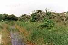 OV_OOSTVOORNSEMEER_03 Het Groene Strand ten zuiden van het Oostvoornse Meer; 14 juni 1989