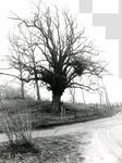OV_RIETDIJK_14 De Lindeboom langs de Rietdijk; ca. 1974