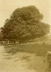 OV_RIETDIJK_18 De Lindeboom langs de Rietdijk; ca. 1935