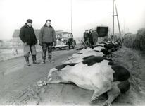 OH_WATERSNOODRAMP_013 Verdronken koeien van Bram van der Meer. Links: Henk de Jong, rechts: Otto Jung; 1 februari 1953