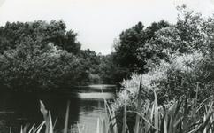 RO_QUACKJESWATER_15 Het Quackjeswater; ca. 1965