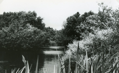 RO_QUACKJESWATER_15 Rockanje; Het Quackjeswater, ca. 1965
