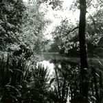 RO_QUACKJESWATER_20 Het Quackjeswater; 31 juli 1961