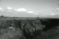 SP_MEELDIJK_013 Kijkje op de koeien in de polder Braband vanaf de Meeldijk. Weilanden langs de vroegere Houwerseweg; 1961