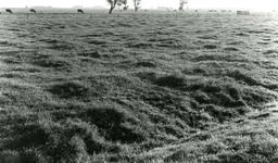 SP_MEELDIJK_014 Kijkje op de koeien in de polder Braband vanaf de Meeldijk. Weilanden langs de vroegere Houwerseweg; 1961