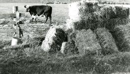 SP_MEELDIJK_021 De boerderij van Bodegom aan de Lange Schenkeldijk, gezien vanaf de Meeldijk. Op de voorgrond hooibalen; 1961