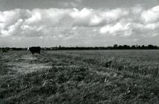 SP_MEELDIJK_024 Kijkje op de polder Braband vanaf de Meeldijk of Houwerseweg. Op de achtergrond het dorp Spijkenisse. ...