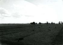 SP_MEELDIJK_028 Kijkje op de polder Braband vanaf de Meeldijk; 1962