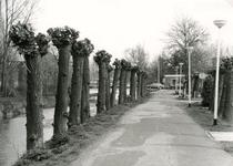 SP_VIERAMBACHTENKADE_009 Spijkenisse; De geknotte wilgen langs de Vierambachtenkade, 1988